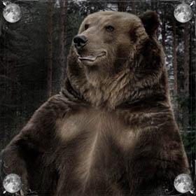 Агрессивный медведь