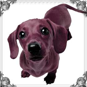 Алая собака