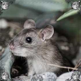 Бегающие мыши