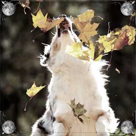 Белая добрая собака