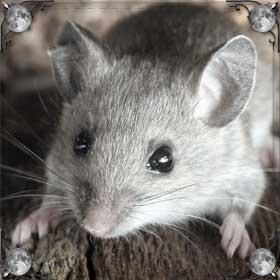 Белая маленькая мышь