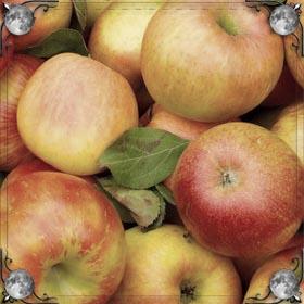 Белые яблоки