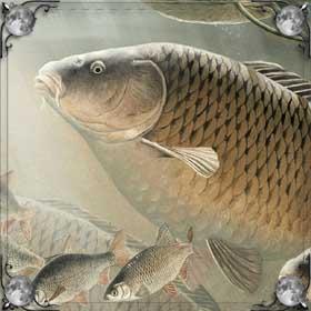 Беременная рыба