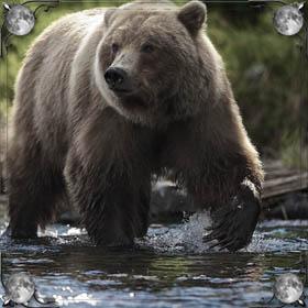 Бежать от медведя