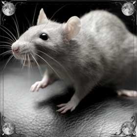 Бить крыс