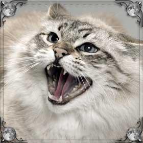 Блохи на кошке