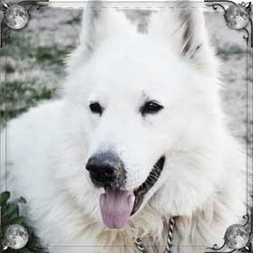Большая добрая собака