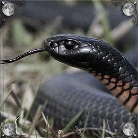 Большая змея