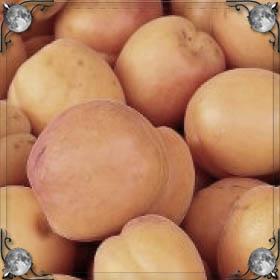 Большие абрикосы