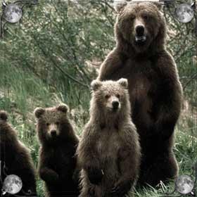 Бояться медведей