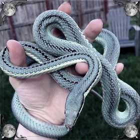 Бояться змею