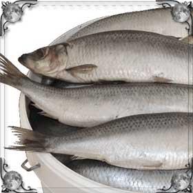 Брать рыбу