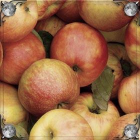 Черные яблоки
