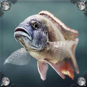 Чешуя от рыбы