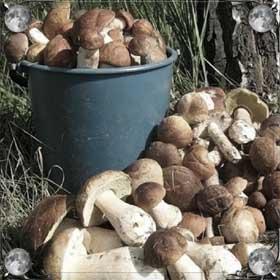 Чистить грибы