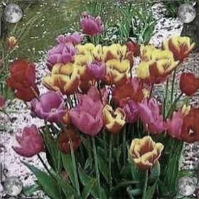 Чужие цветы