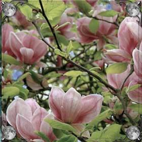Цветы розового цвета