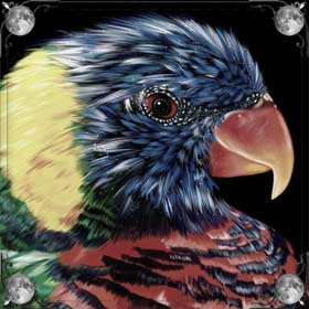 Цветной попугай