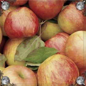 Дают яблоко