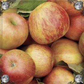 Дарят яблоки