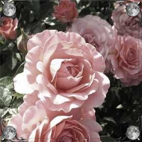 Дарить цветы женщине