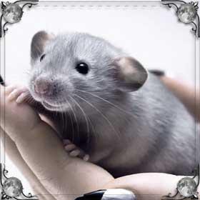 Давить крыс