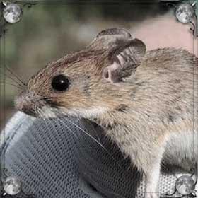Давить мышей