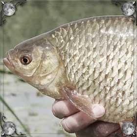 Держать рыбу