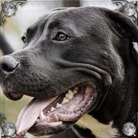 Добрая черная собака