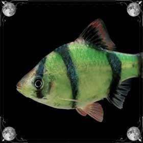 Дохлые рыбки