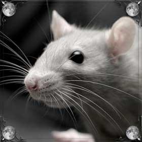 Душить мышь