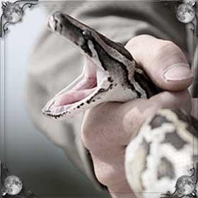 Душить змей