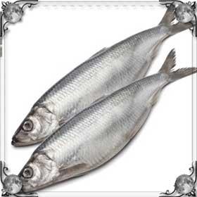 Две рыбы