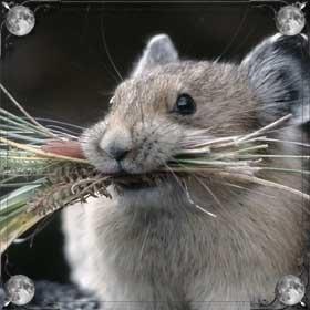 Едят мышь