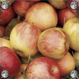 Есть вкусное яблоко