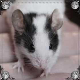 Гладить мышь