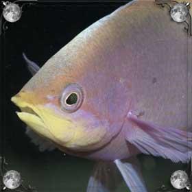 Глаза рыбы