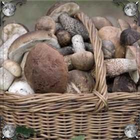 Гнилые грибы