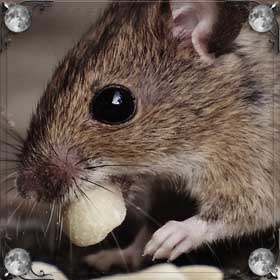 Голова мыши