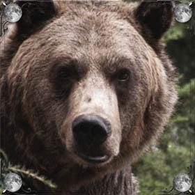 Гоняется медведь