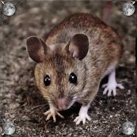 Гонять мышей