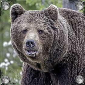 Гонится медведь