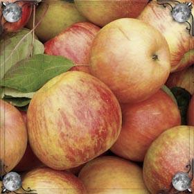 Гора яблок
