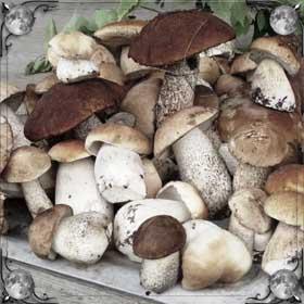 Готовить грибы