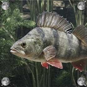 Грязная рыба