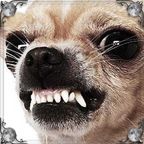Грызут собаки