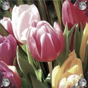Громадные тюльпаны
