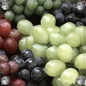 Гроздья зеленого винограда