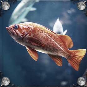 Хвост рыбы
