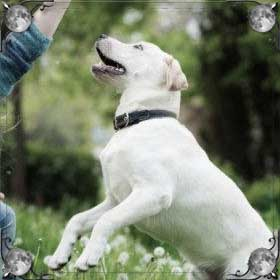 Играющие собаки